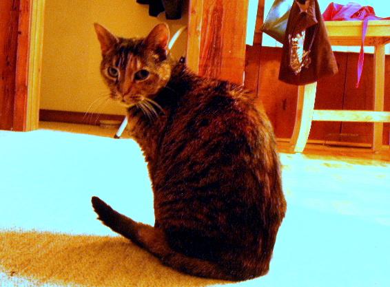 Jasmine, a tortoise shell cat, sits on the floor